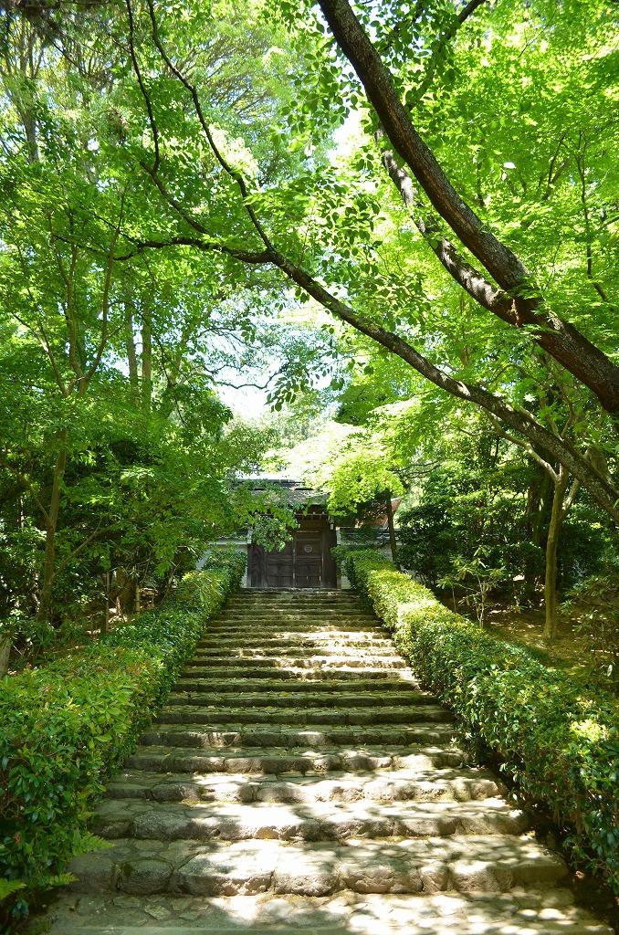 ryoanji-7.jpg