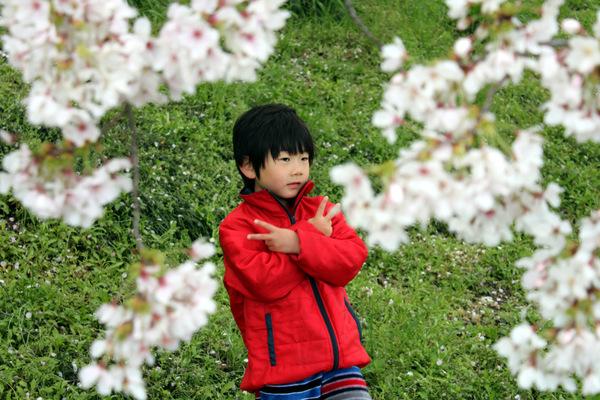 お花見14.4.6④