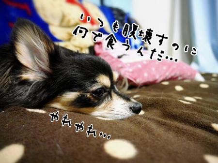 CAIGOOBI_convert_20140620204809.jpg