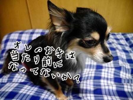 CAJP6TKX_convert_20140426204828.jpg