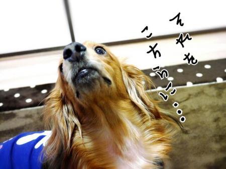 CAQNYTU8_convert_20140521215137.jpg