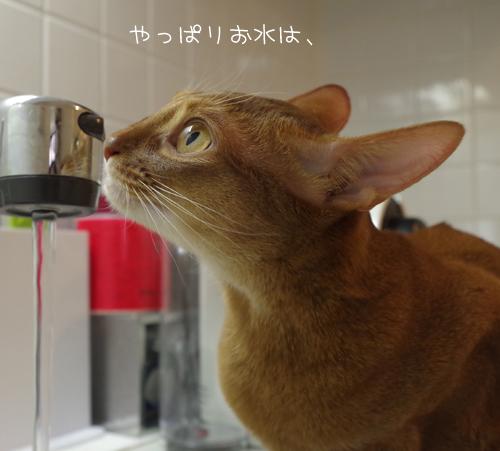やっぱりお水は、