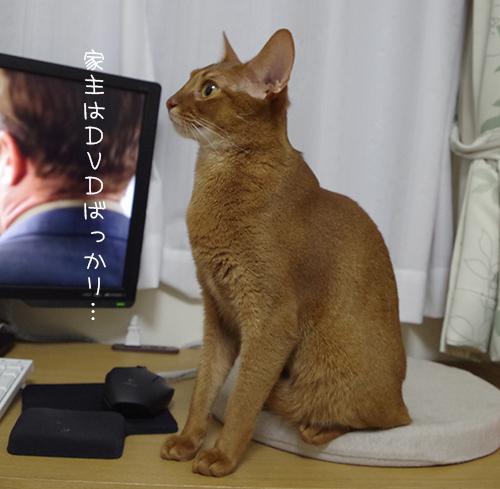 DVDばっかり