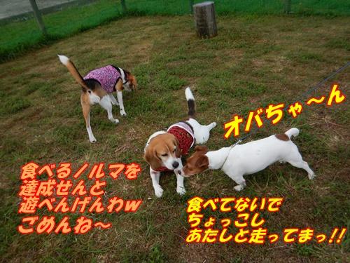 DSCN1189.jpg