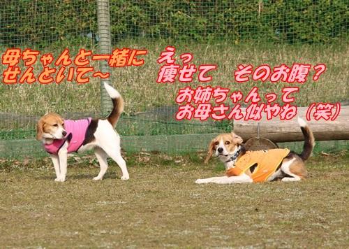IMG_5202_201404191650441a7.jpg