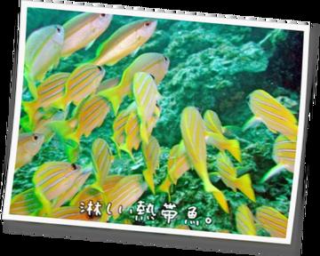 淋しい熱帯魚。11
