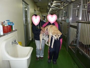 長崎 Life of Animalのブログ
