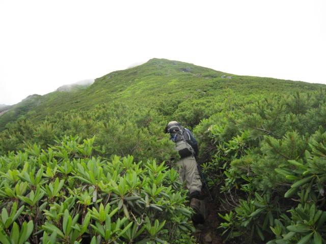 横岳手前のハイマツ帯