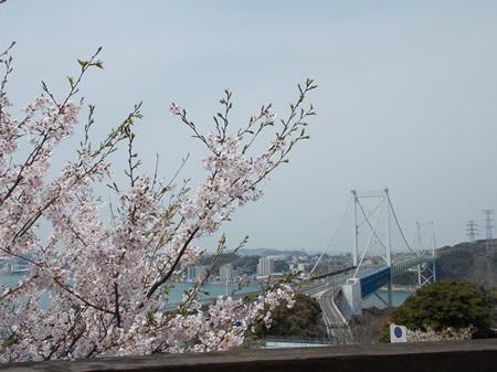 めかり公園 桜