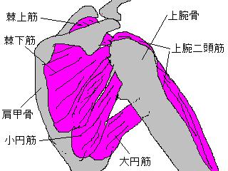 肩関節のトラブル