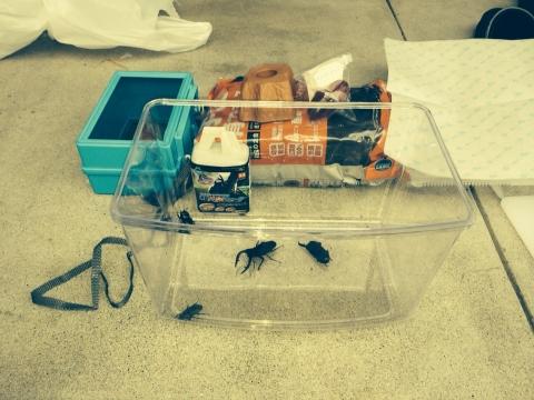 TFC昆虫採取2