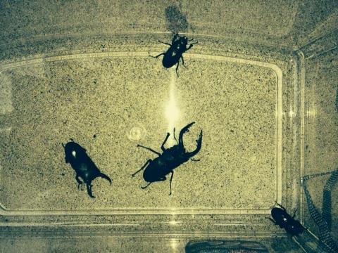 TFCの昆虫採取1