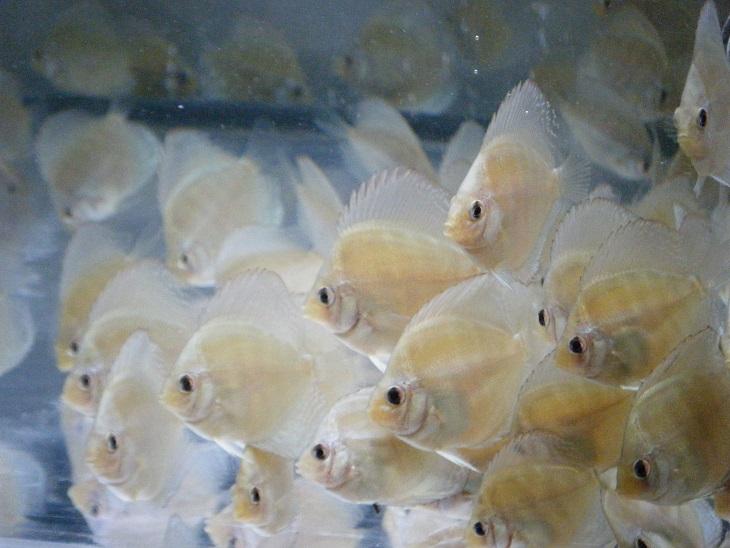 20140801-幼魚1