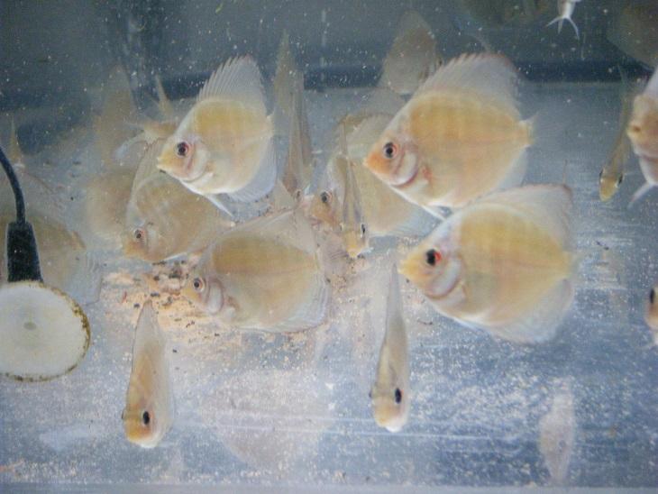 20140805-換水後幼魚水槽1残餌