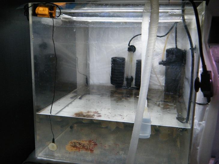 20140805-排水時幼魚水槽1残餌
