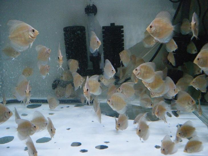 20140814-幼魚水槽2