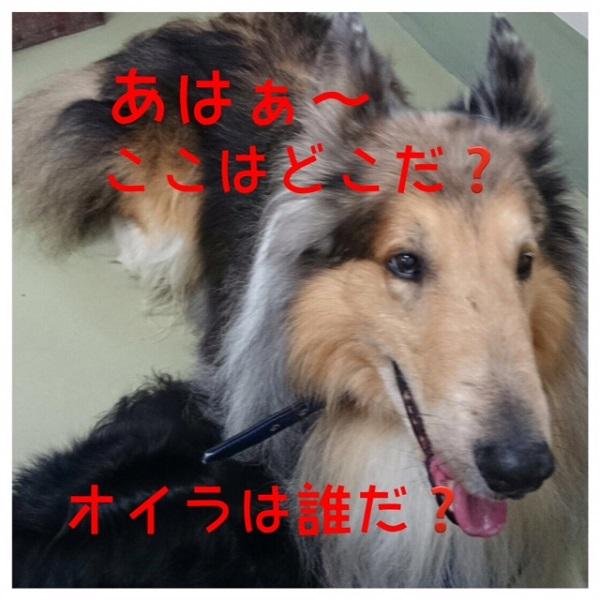小次郎HP