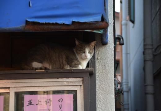 舎人・西新井大師 (447)_R
