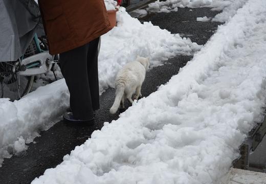 雪の谷中 (148)_R