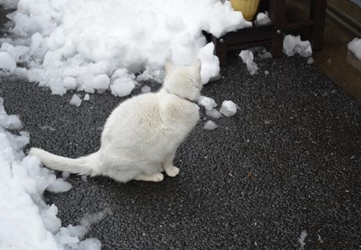 雪の谷中 (153)_R