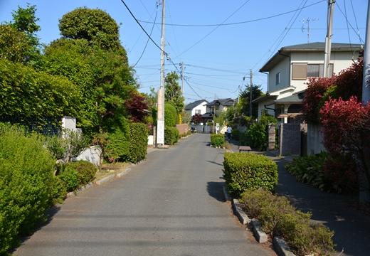 盆栽町10 (190)_R