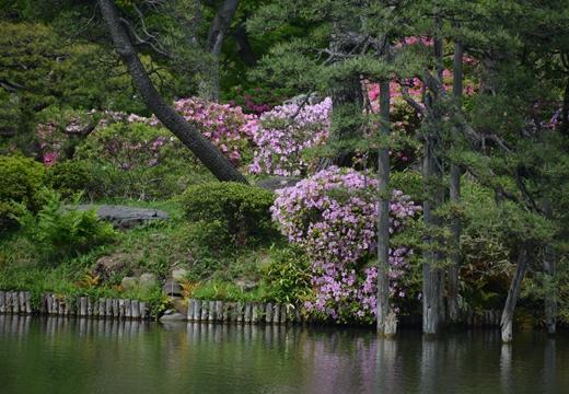 花と人のお祭り詣で (131)_R
