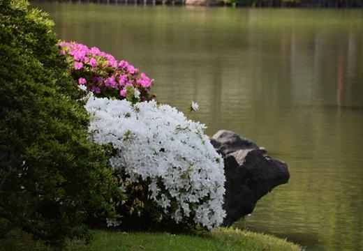 花と人のお祭り詣で (147)_R