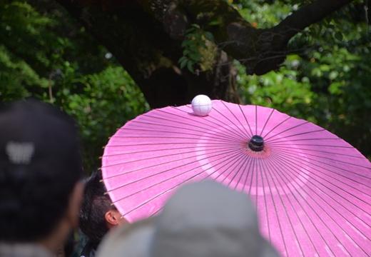 花と人のお祭り詣で (248)_R