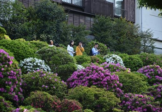 花と人のお祭り詣で (520)_R