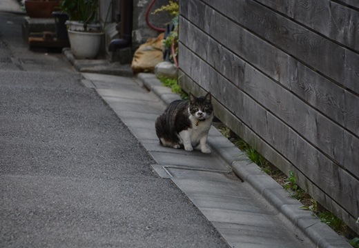 石川台・桐ケ谷 (149)_R