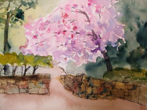 西明石 桜