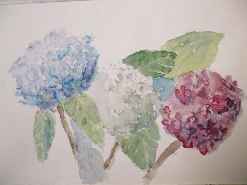 蛍 紫陽花