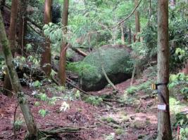 山道から見える石、大きいが・・。