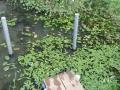 池after