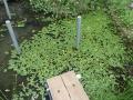 池before