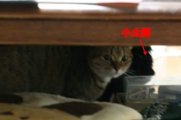 kotasuzu268.jpg
