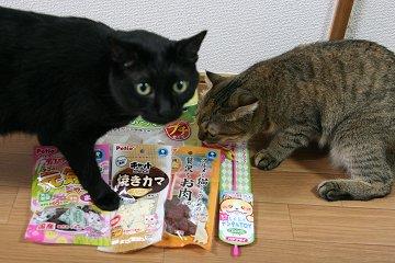 kotasuzu276.jpg