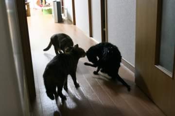 kotasuzumiyu26.jpg