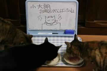 kotasuzumiyu27.jpg