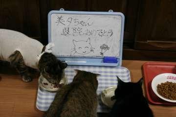 kotasuzumiyu32.jpg