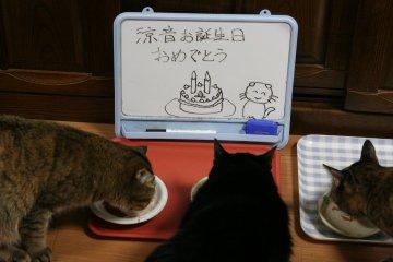 kotasuzumiyu35.jpg