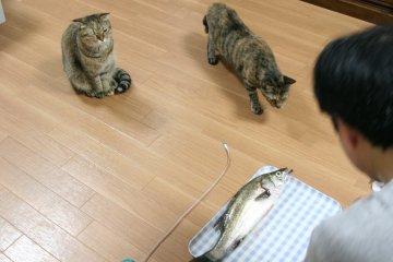miyusuzu46.jpg