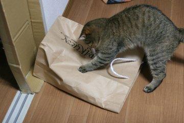 suzu649.jpg