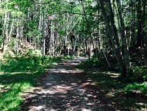 オンネトー湯の滝遊歩道
