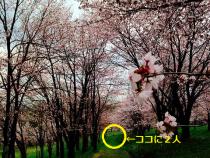 キトウシ山 花見