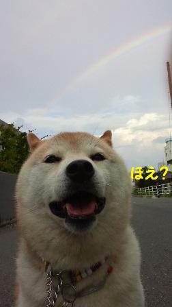 虹とくるみ