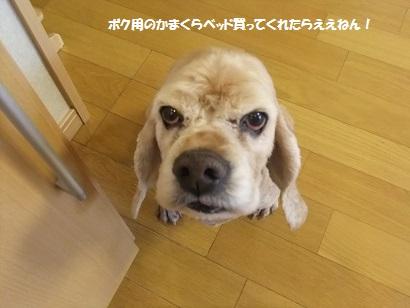 ケチケチせんと買い~なぁ~!