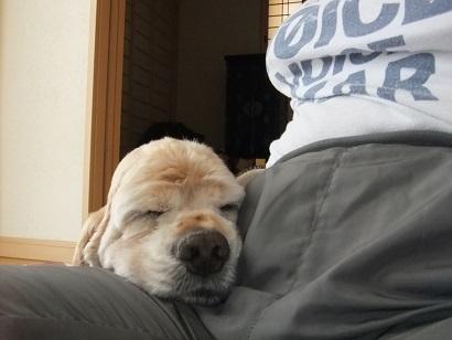 くっついて寝るのが大好きです♪