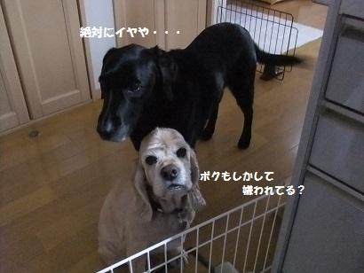 ゆきおもチーもイヤ!!