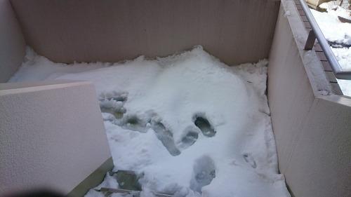 大雪2DSC_0097